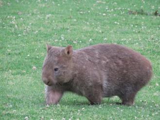 Australia_1461_resize