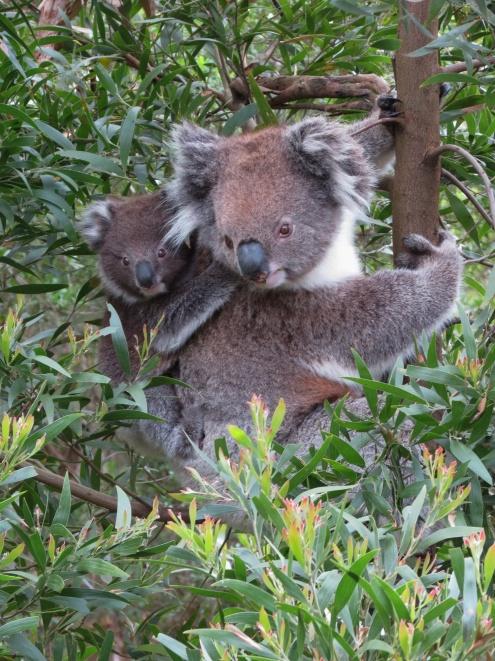 Australia_1565_resize