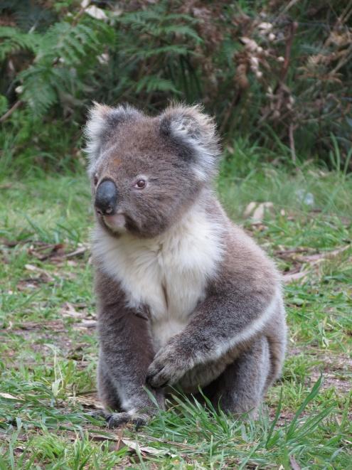 Australia_1567_resize