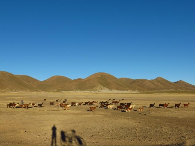 Bolivia1140_resize
