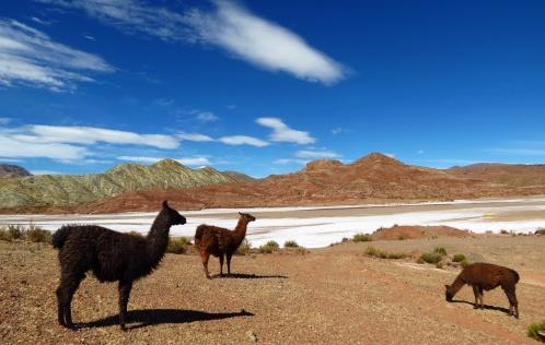 Bolivia1148_resize