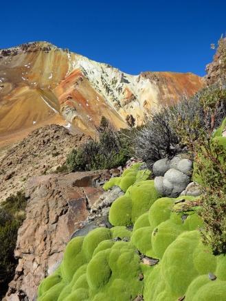 Bolivia1298_resize