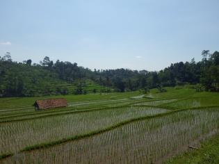Indonesia1025_resize