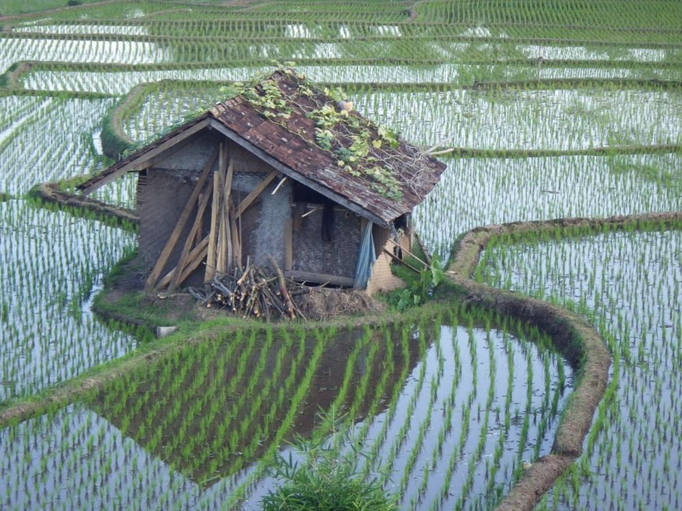 Indonesia1031_resize