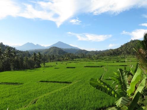 Indonesia1241_resize