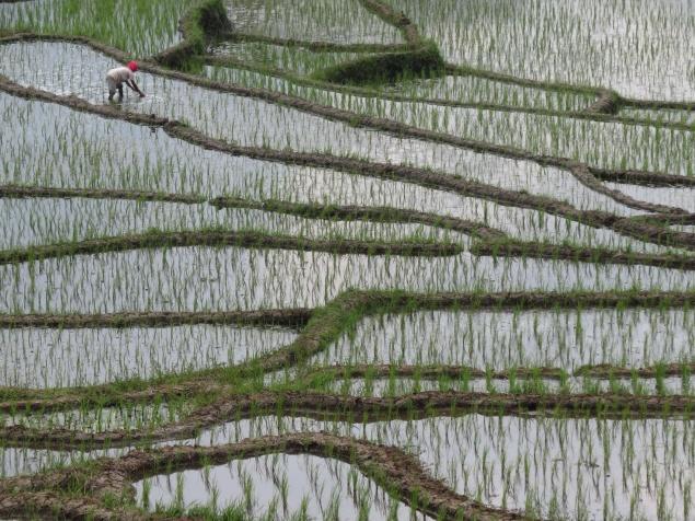 Indonesia1460_resize