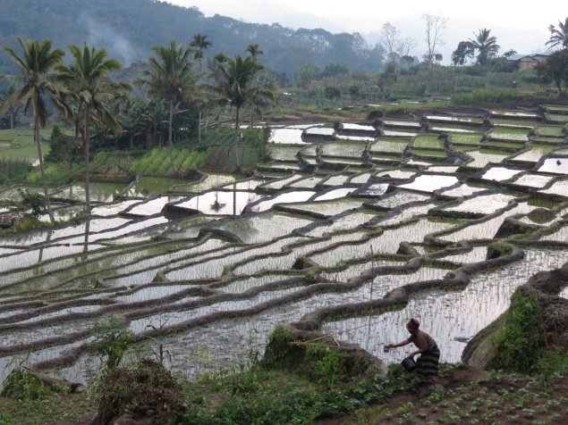 Indonesia1466_resize