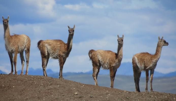 PatagoniaArgentinaChile_1060_resize
