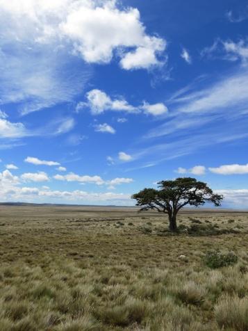 PatagoniaArgentinaChile_1067_resize