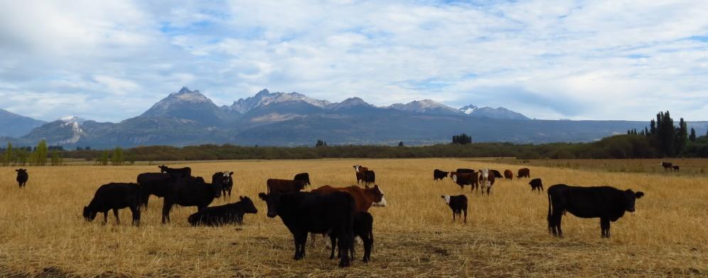 PatagoniaArgentinaChile_1368_resize