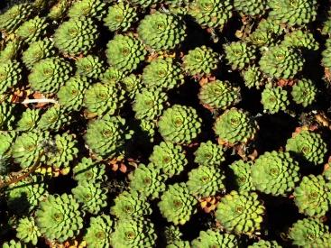 PatagoniaArgentinaChile_1654_resize