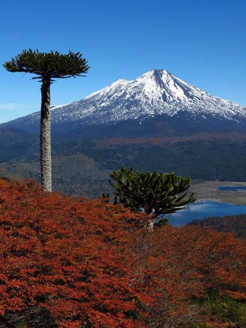 PatagoniaArgentinaChile_1658_resize