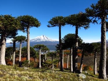 PatagoniaArgentinaChile_1660_resize
